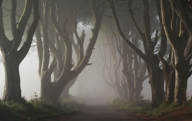 The Dark Hedges, Nordirland.