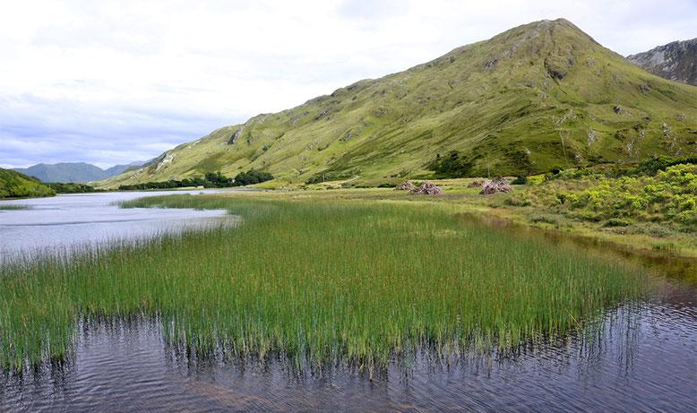 Pollacapall Lough südöstlich der Nationalstraße N59  und Kylemore Abbey.