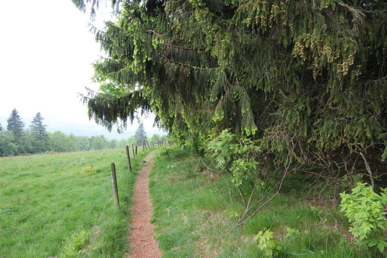 Wanderweg entlang der Waldgrenze am Fuß der Milseburg (Ostseite).