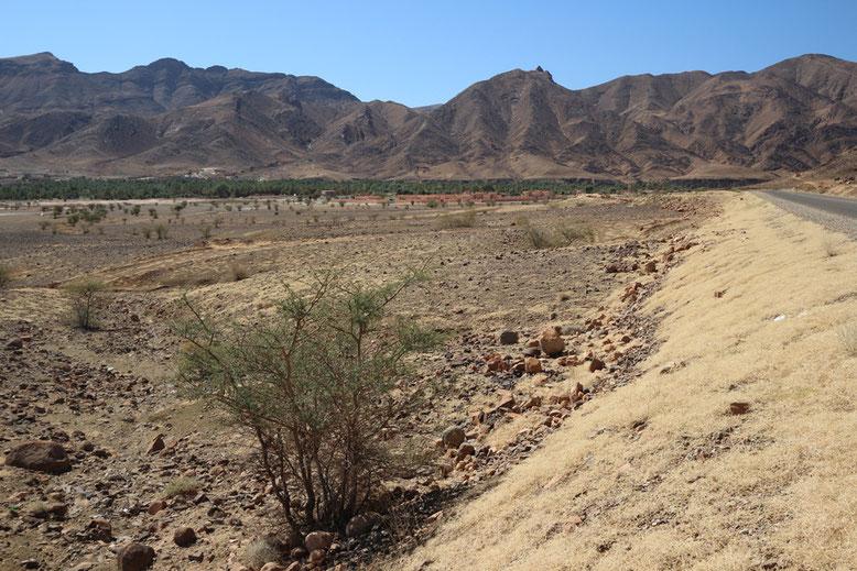 Im Bildhintergrund ist bereits das grüne Band des Draa-Tals zu erkennen.