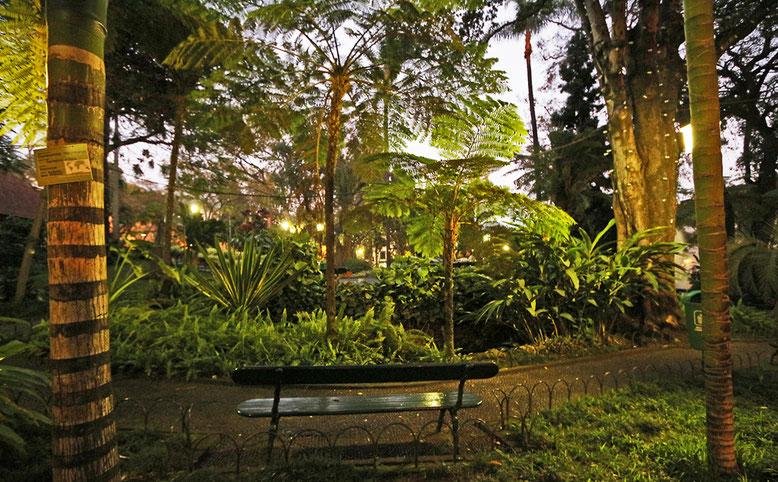 Baumfarne im Stadtpark von Funchal.