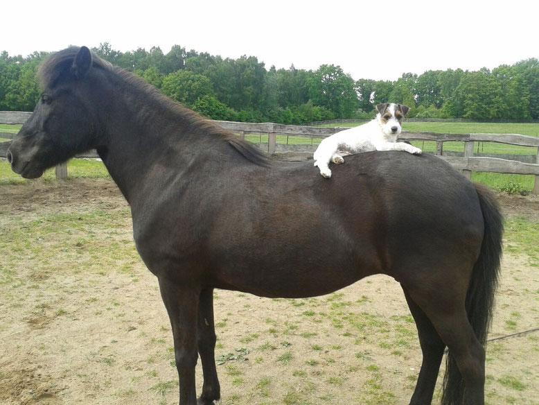 So ein Pferderücken ist der optimale Liegeplatz!