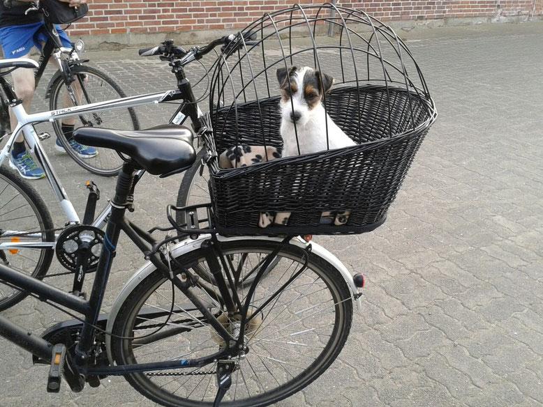 Gavin ist mit 10 Wochen das erst Mal auf Fahrradtour