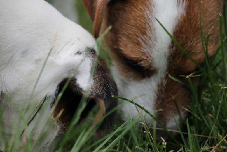 Stella muss alles sehen, riechen und aufspüren!