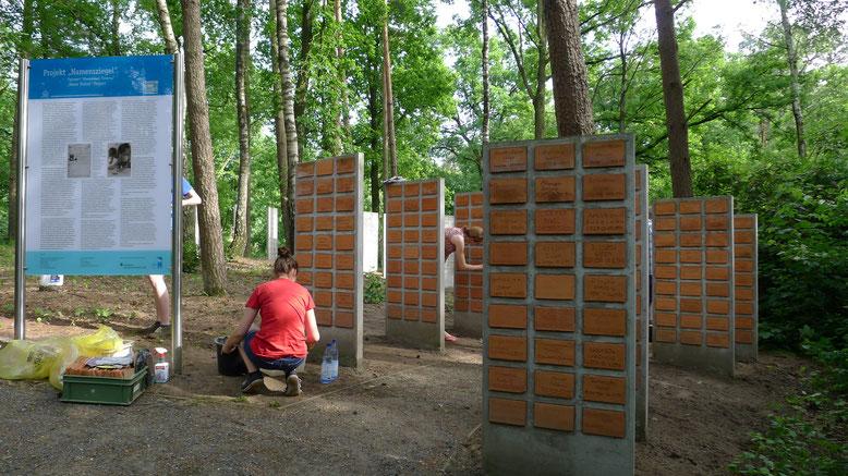 Jugendliche beim Anbringen von Namenziegel an Betonstelen auf der Kriegsgräberstätte Sandbostel. Foto: A. Ehresmann, 7.6.2014