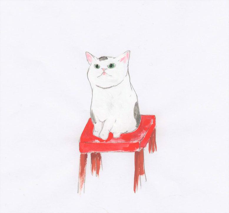 猫・猫イラスト・猫雑貨・白猫