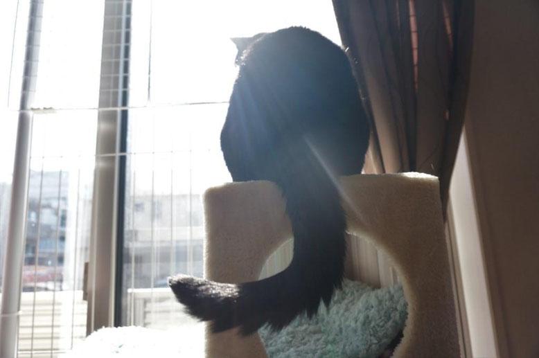 穏やかな猫写真