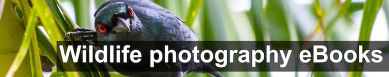 wildlife and birds photography free pdf ebooks