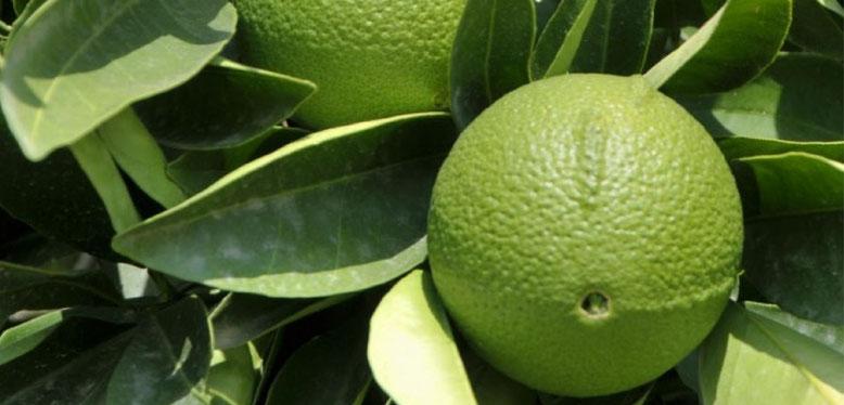 Olio Essenziale di Bergamotto, utile per il cambio di stagione