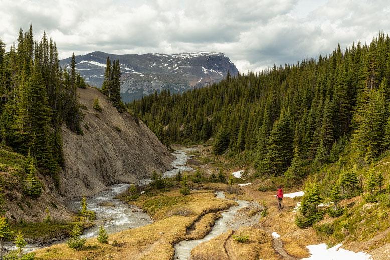One of the 5 major creek crossings on the Skyline Trail in Jasper National Park.