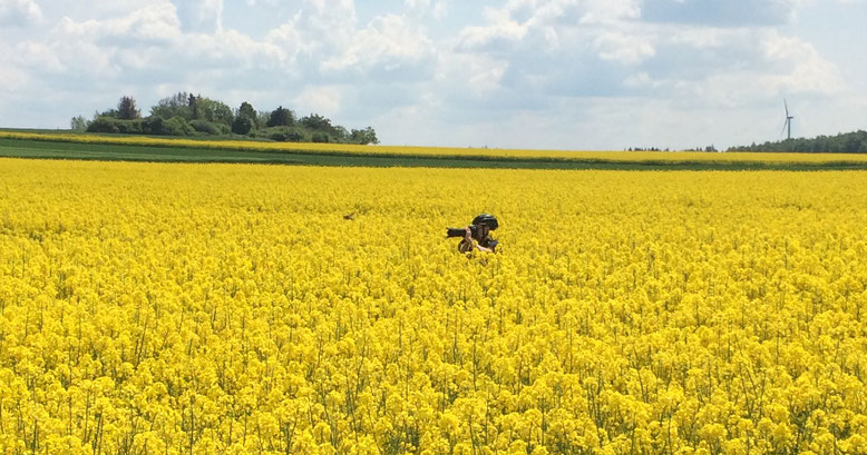 Fotograf im Rapsfeld