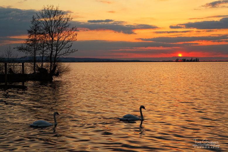 Abend am Steinhuder Meer