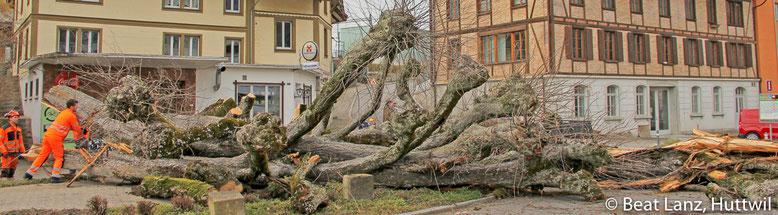 Bäume fällen, Huttwil