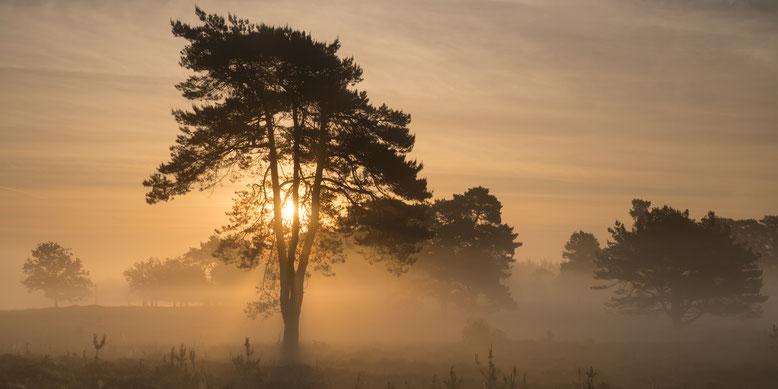 Leersumse Veld, zonsopkomst