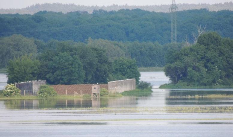 Überflutung  der Elbe, Wolmirstedt nähe Handwerkerring