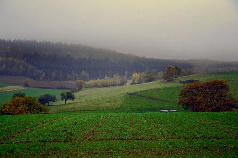Naturlandschaften bei Nebel und Abenddämmerung im Brohltal