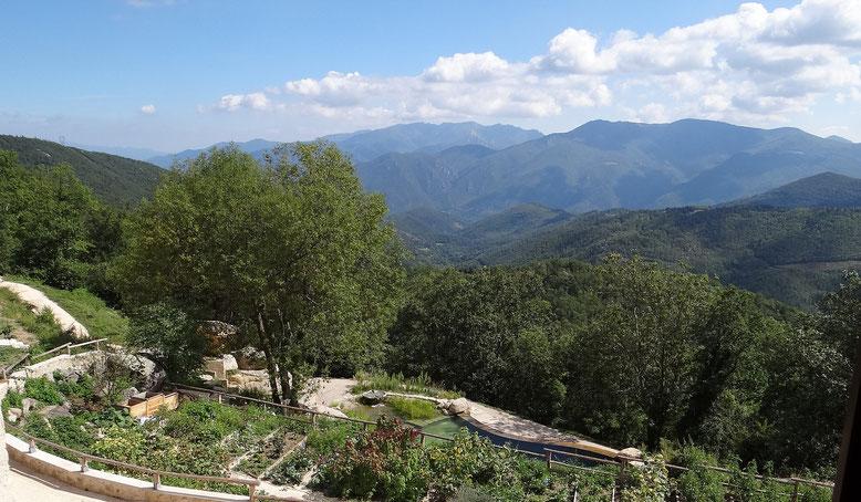 Le jardin de plantes aromatiques