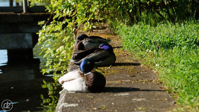 die Herren nehmen ein erstes Sonnenbad | Foto: © Detlef Zabel