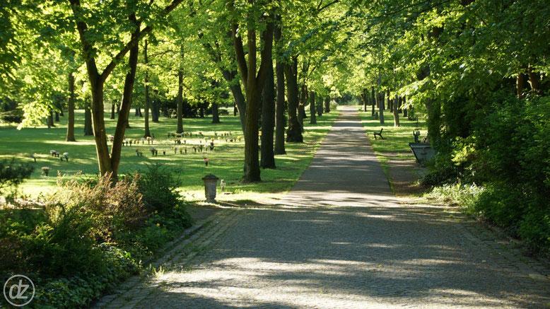 Friedhof Baumschulenweg | Foto: © Detlef Zabel