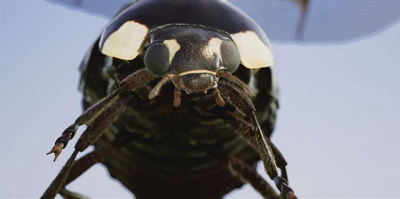 Die Insects-Demo für Xbox One X veranschaulicht die technischen Möglichkeiten mit HDR und 4K-Auflösung. Bild: Microsoft