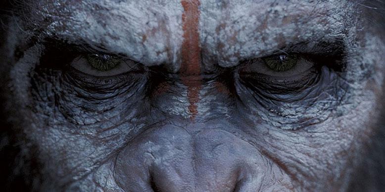 Erster deutscher Kino-Trailer zu Planet der Affen 3: Survival erschienen. Bilderquelle: 20th Century Fox