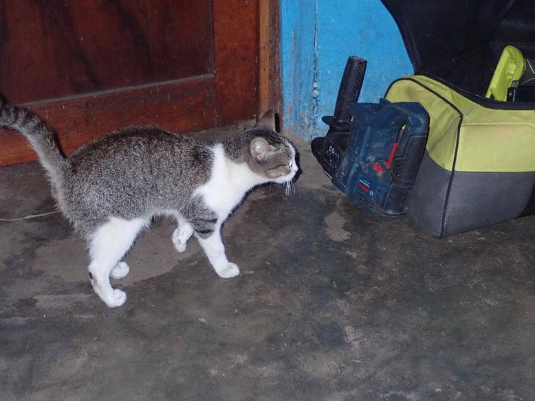 Unsere neuste Mitbewohnerin. Sie ist für die Rattenplage zuständig.