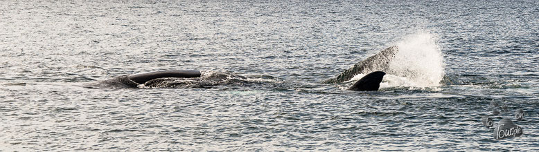 Las Canteras - Walbeobachtung vom Strand aus - vor der Peninsula Valdés