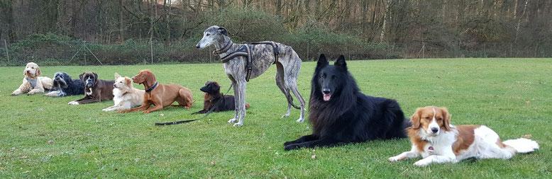 Hundeschule in Haltern für alle Hunde jeder Größe