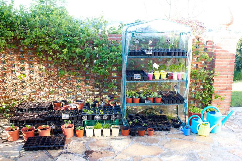 La Silvestre Santander-plantas y flores para decorar