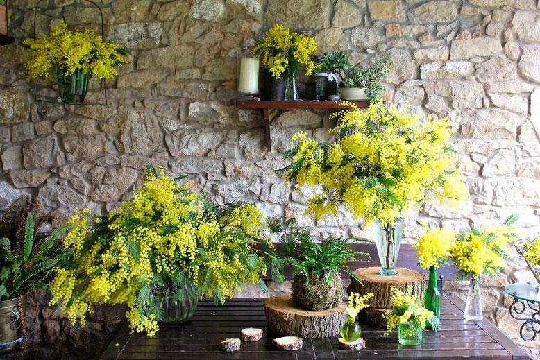 La Silvestre, Santander, Cantabria. Flores y plantas