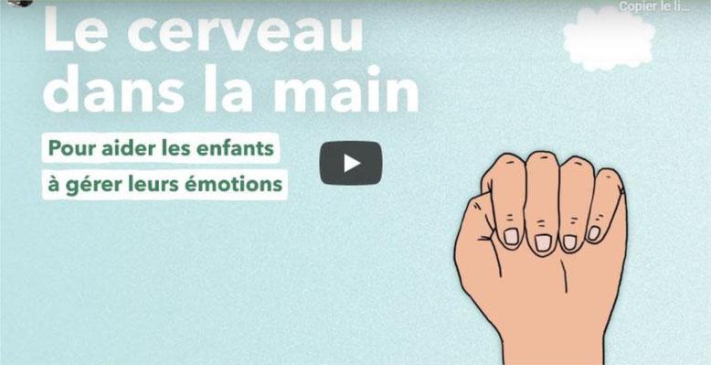 Le cerveau dans la main. Régulation des émotions. Daniel Siegel.