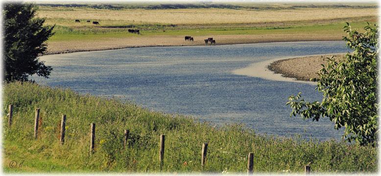 Eine Flusslandschaft (Maas)