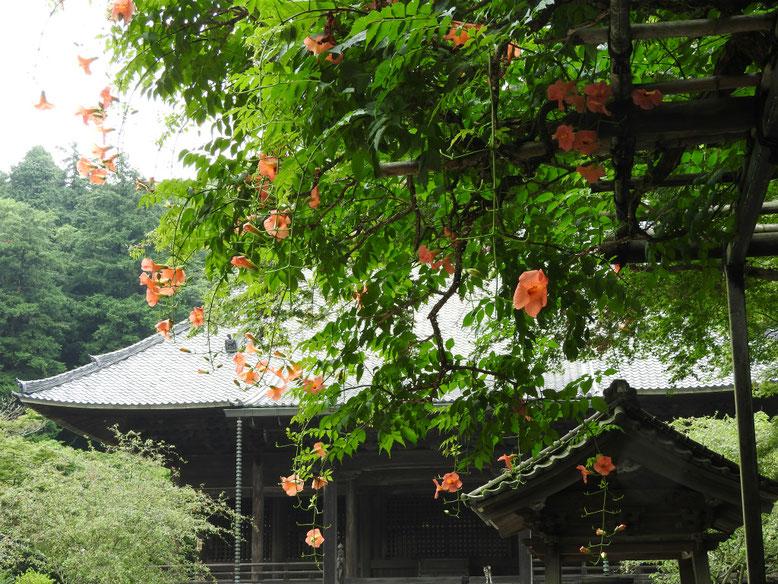 凌霄花(のうぜんかずら) 鎌倉妙本寺 160716撮影