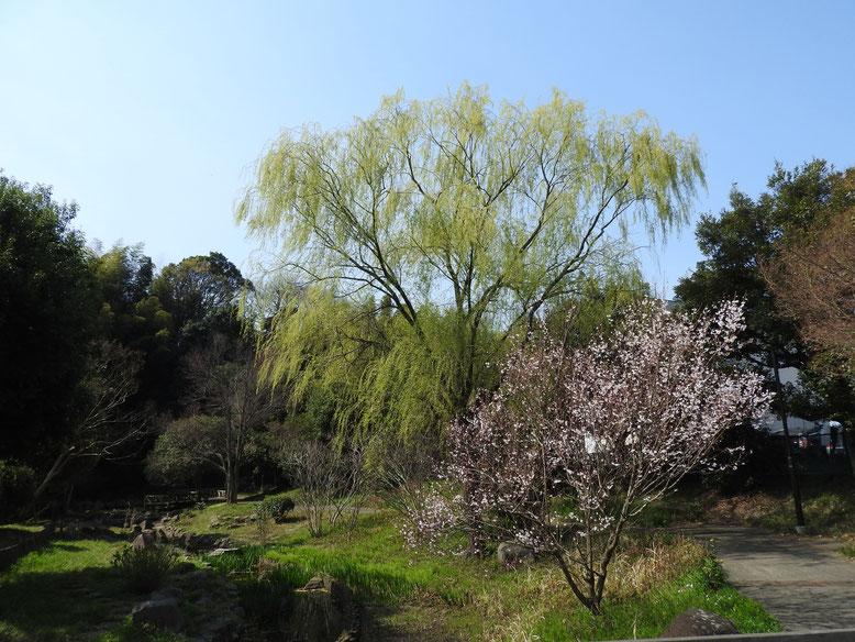 春の散策路 2019/03/27撮影