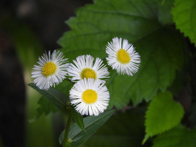 春紫苑(はるじおん) 散策路 160507撮影
