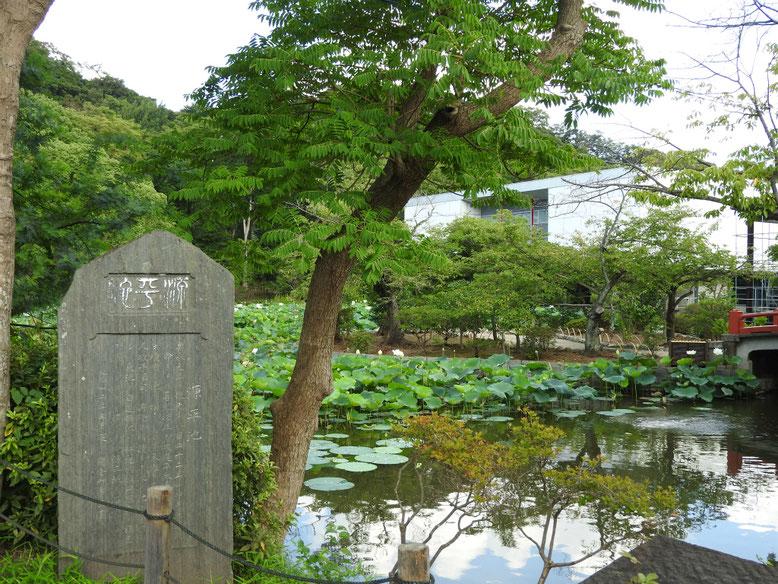鶴岡八幡宮平家池 160804撮影