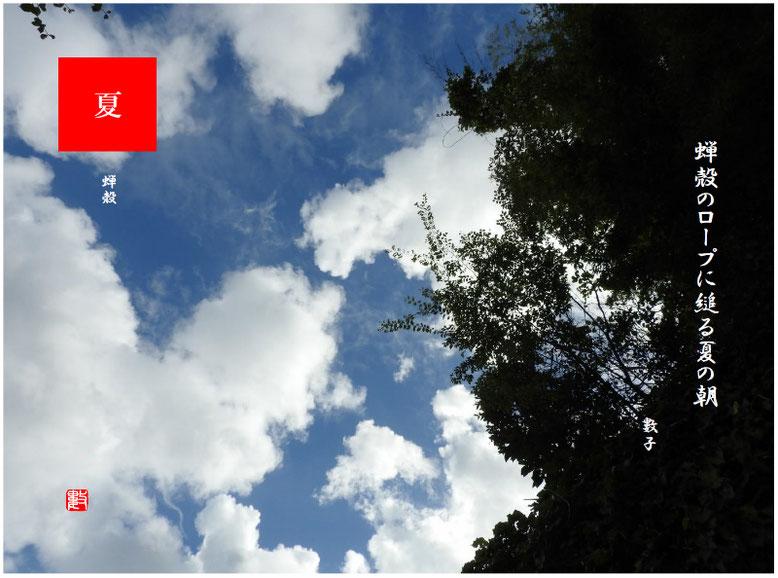 蝉殻のロープに縋る夏の朝  蝉殻(せみがら)2019/08/15作句 散策路2019/09/08撮影