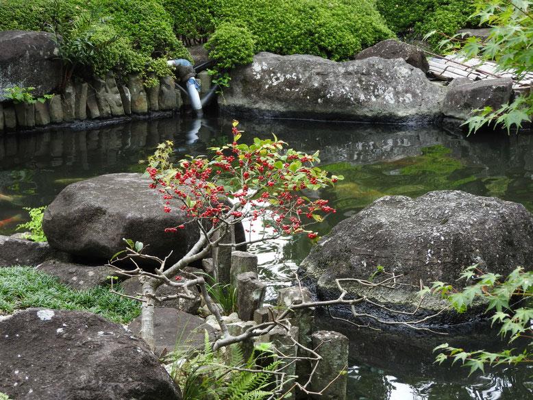 梅擬(うめもどき) 長谷寺庭園 171005撮影