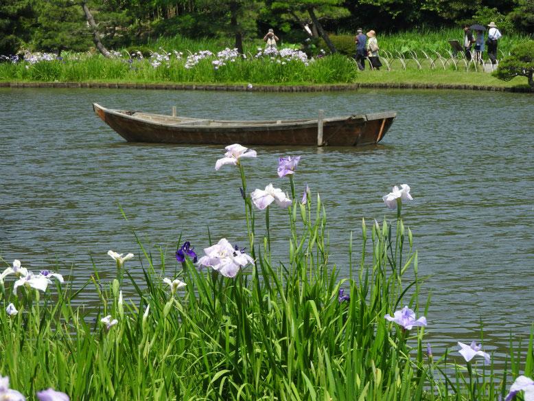 花菖蒲(はなしょうぶ) 三溪園大池 170620撮影
