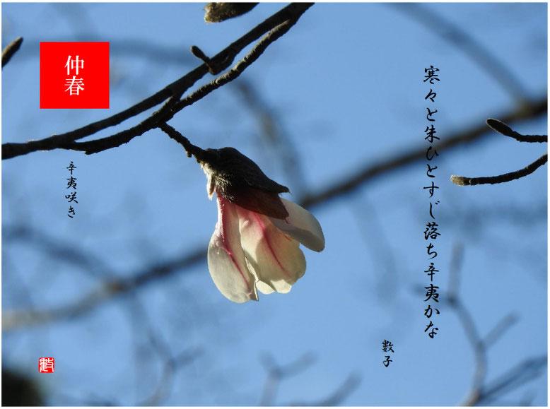 辛夷咲き(こぶし) 2020/03/23制作 親水公園の辛夷
