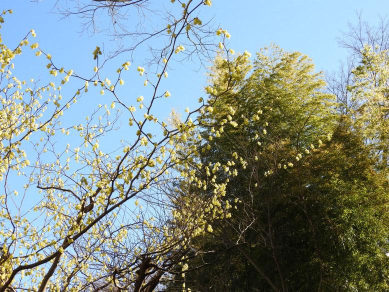 日向水木(ひゅうがみずき)親水緑道 2021/03/03撮影