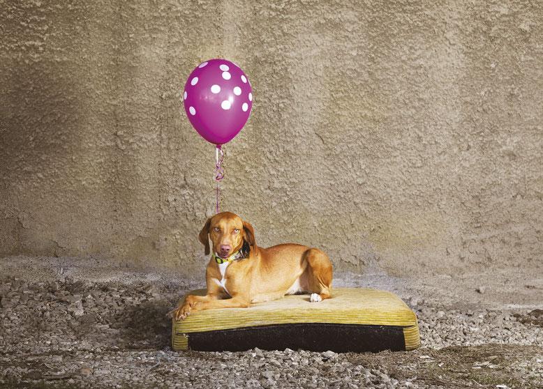 cane-palloncino-rosa-canile-cuscino