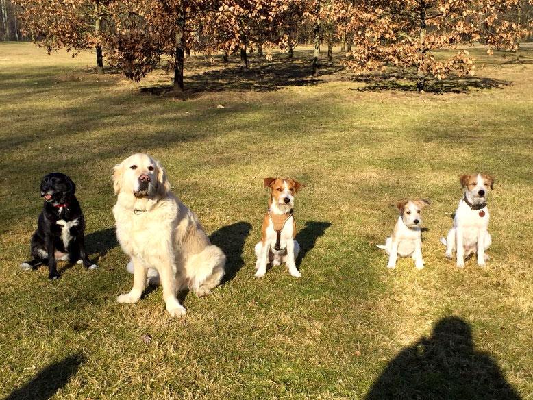 Molly, Amigo, Anton, Cataleya & Kabou
