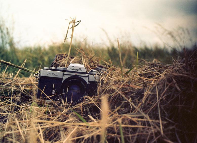 Minolta XE-1 - Wildlife Fotografie