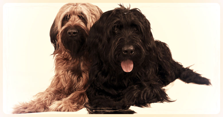 Hundefriseur und Fellpflege - Hundesalon Plisch & Plum,
