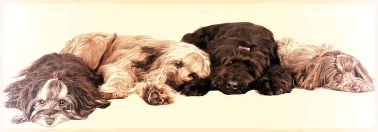 Briards, Havaneser - Hundesalon Plisch & Plum