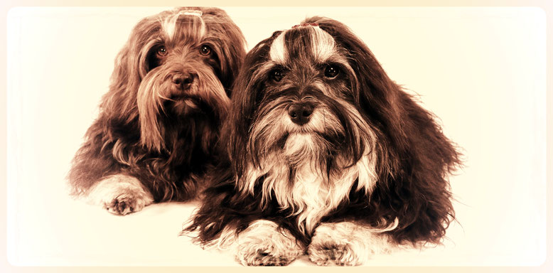 Hundesalon Plisch & Plum - Typgerechte, liebevolle Fellpflege