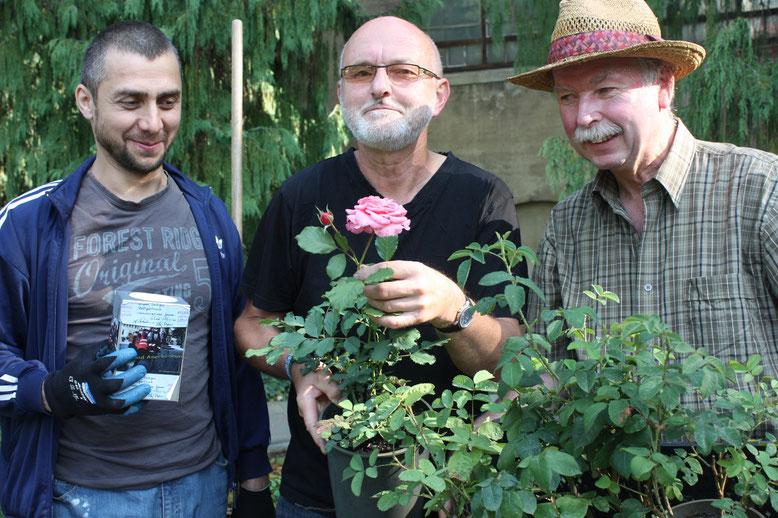 Roland Greaff (r.) übergab die Rosenpflanzen an Stadtgärtner Reinhard Straach (M.) und an seinen aus Inguschetien stammenden Helfer Beslan Dzeytov.