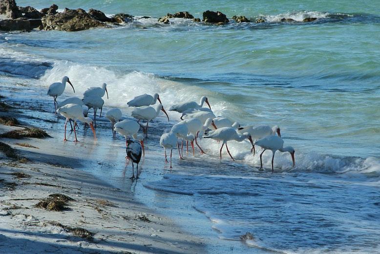 Strand von Anna Maria Island