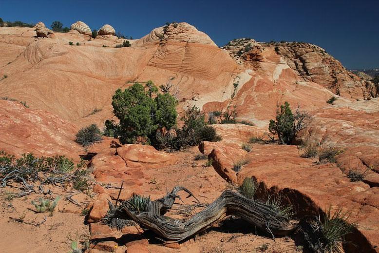 Rundreise Zion, Moab, Escalante, Page, Las Vegas
